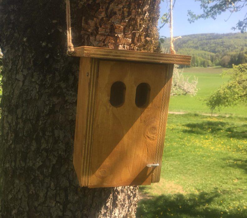 Favorise la biodiversité autour de chez toi!